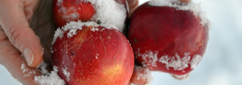 Какой вред несет новогоднее переедание?