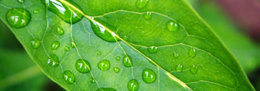 Зеленые растения помогают снижать аппетит