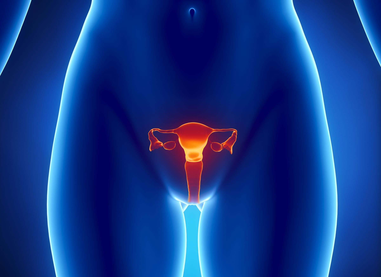 Фото половых орган у девушек 30 фотография